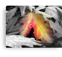 Fall color - Chico, CA Canvas Print