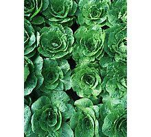 Garden Greenery Photographic Print