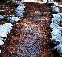 Mountain Trail by Tori Snow