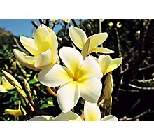 Tropical Plumeria Photographic Print