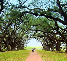 Oak Alley Plantation by Wanda Raines