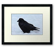 Crouching Raven Framed Print