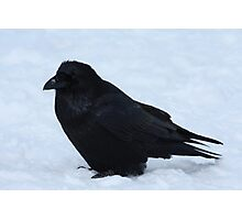 Crouching Raven Photographic Print