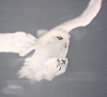 Snowy Owl by David M Scott