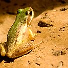 Green Backed frog by bettyb