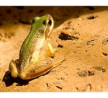 Green Backed frog Photographic Print