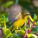 Sun Bird by bettyb