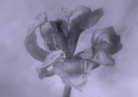 Textured Tulip - JUSTART ©  by JUSTART