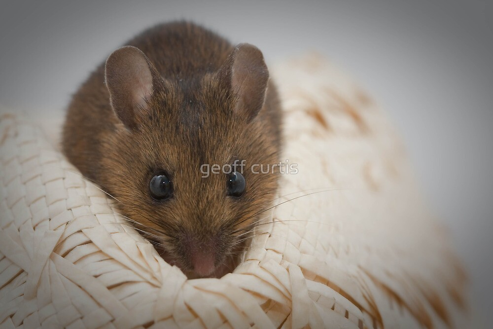 Maurice the Mouse by geoff curtis