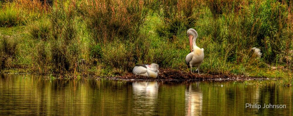Pelican Dreaming- Tidbinbilla Sanctuary, Australia - The HDR Experience by Philip Johnson