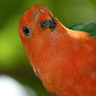 Who? Me? Portrait of a King Parrot - Ballogie, Queensland Australia by Gryphonn