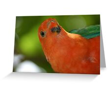 Who? Me? Portrait of a King Parrot - Ballogie, Queensland Australia Greeting Card