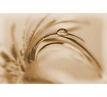 """mocha drop"" Photographic Print"