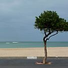 Tree at the beach by fourthangel