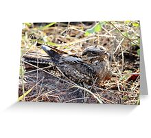 Fiery Necked Nightjar Greeting Card