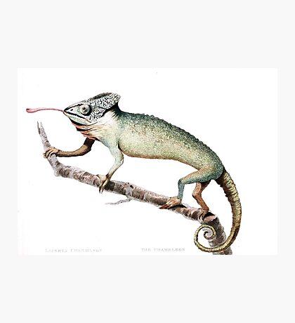Chameleon Vintage Art Photographic Print