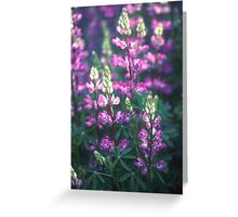 Lupins, Fort Dick, California Greeting Card