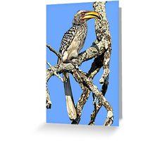 Yellow Billed Hornbill Greeting Card
