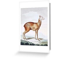 Common Musk Dear Art Greeting Card