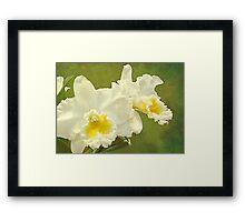 White Elegance Framed Print