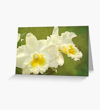 White Elegance Greeting Card
