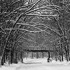 Winter Scenes by PixelPerfectPho