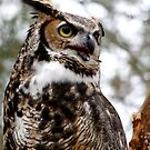 Great Horned Owl by Lolabud