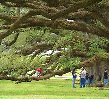Just Another View Of The Huge Live Oaks by Wanda Raines
