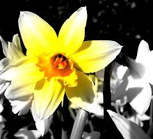Sunshine Burst by Josephine Pugh