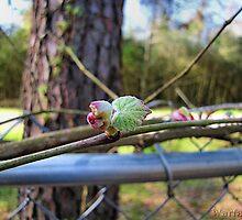New Grape Leaf-1 by WarfareFX
