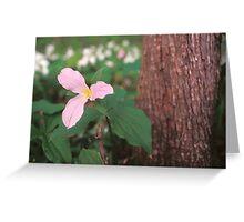 Pink Trillium Greeting Card
