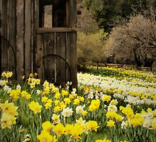 Country Spring by Barbara  Brown