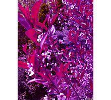Purple Leaves Photographic Print