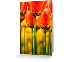 Garden of Tulips Greeting Card