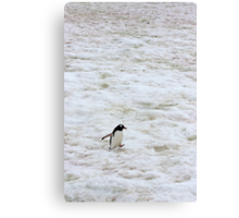 "Gentoo Penguin ~ ""It's a long walk home"" Canvas Print"