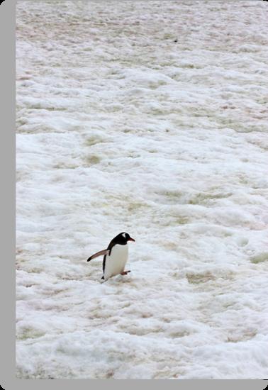 "Gentoo Penguin ~ ""It's a long walk home"" by Robert Elliott"