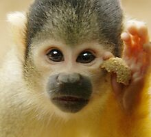Squirrel Monkey by LisaRoberts