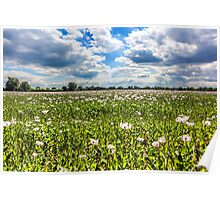 Poppy Field and Clouds Poster