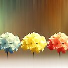 Geranium dreams by shalisa