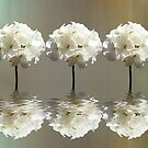 Five geraniums by shalisa