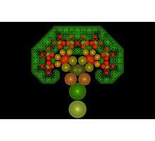 Pythagoras' Apple Tree Photographic Print