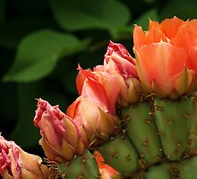 Prickly Pears by Intheraine
