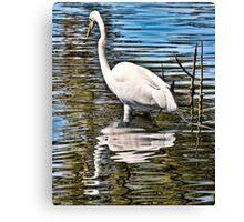 Audubon Wildlife Canvas Print
