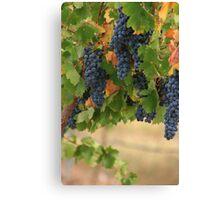 Full Vines Canvas Print