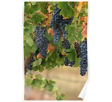Full Vines Poster