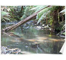 Julius River Forest Reserve Poster