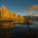 Wanaka by Mrs Mel Brackstone