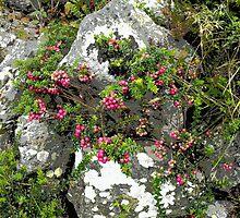 Merry berries by Agnieszka Jarecka