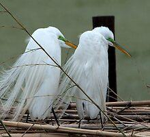 Avery Island Egrets--Marital Bliss by Bonnie T.  Barry