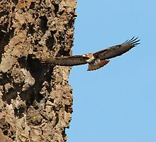 HUNTING THERMALS by Rodney55
